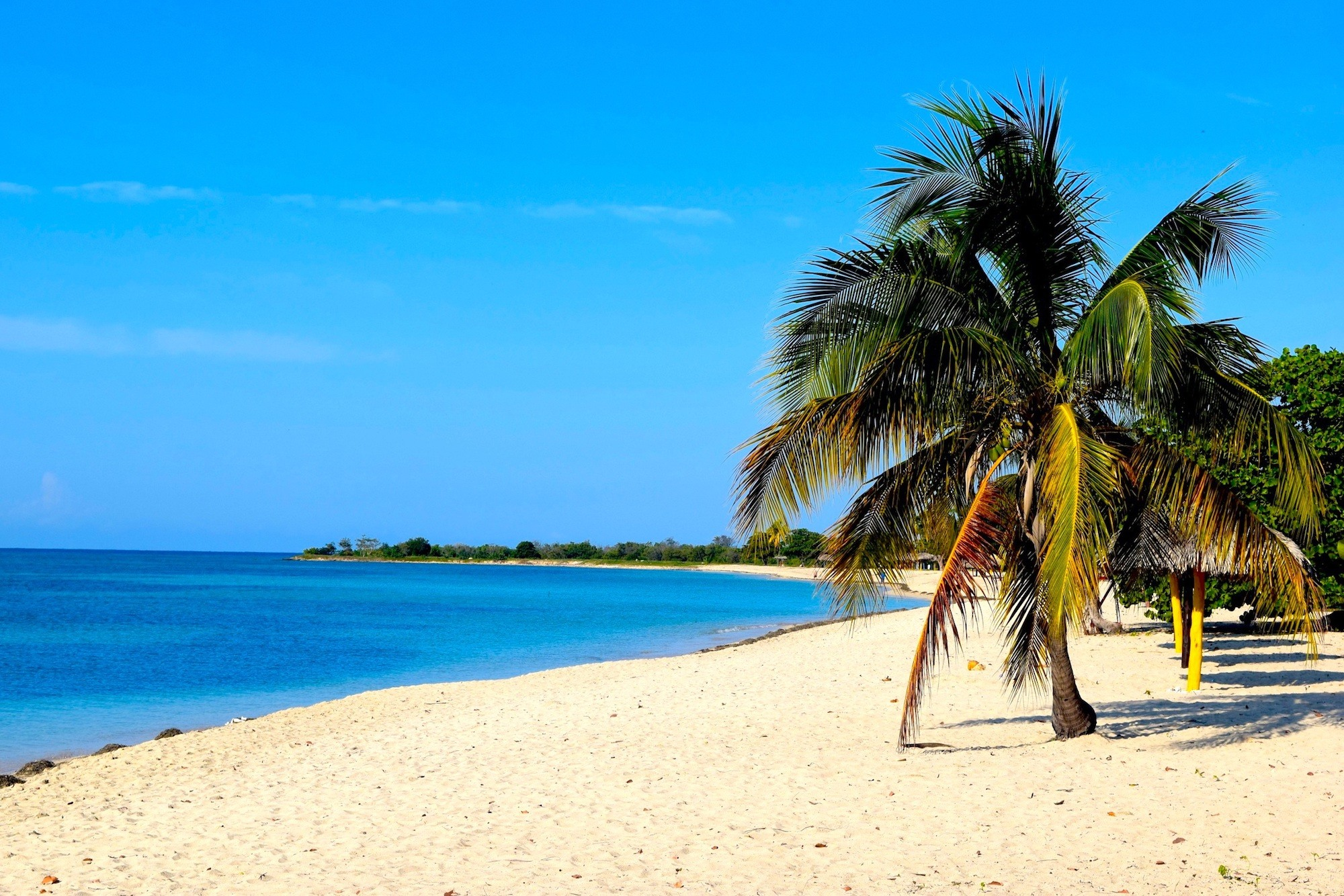 Cuba Beach & Palm Trees