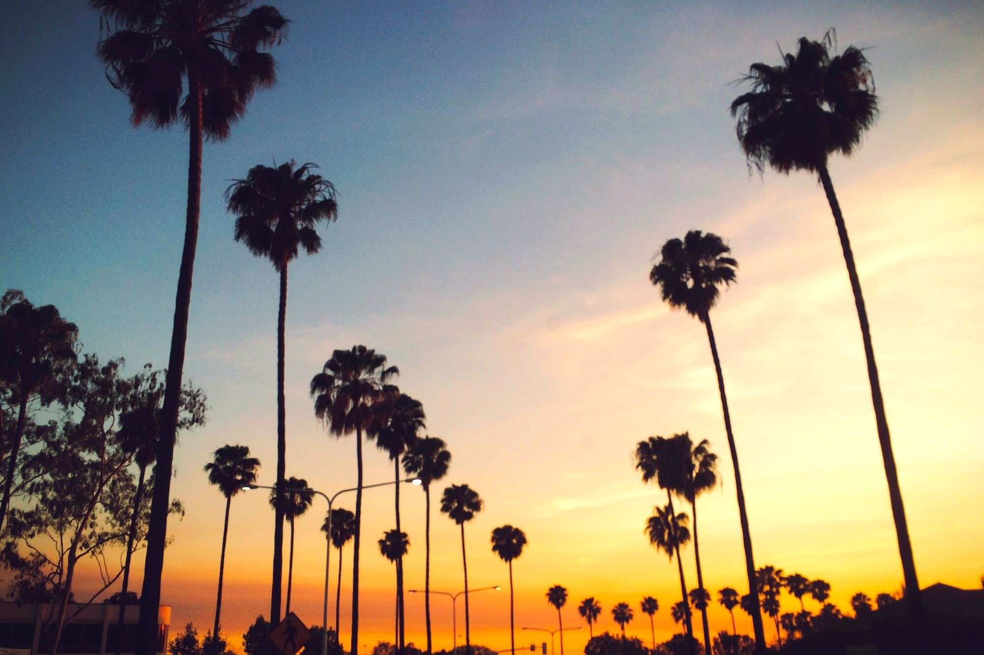 Sunset Boulevard Palm Trees Los Angeles