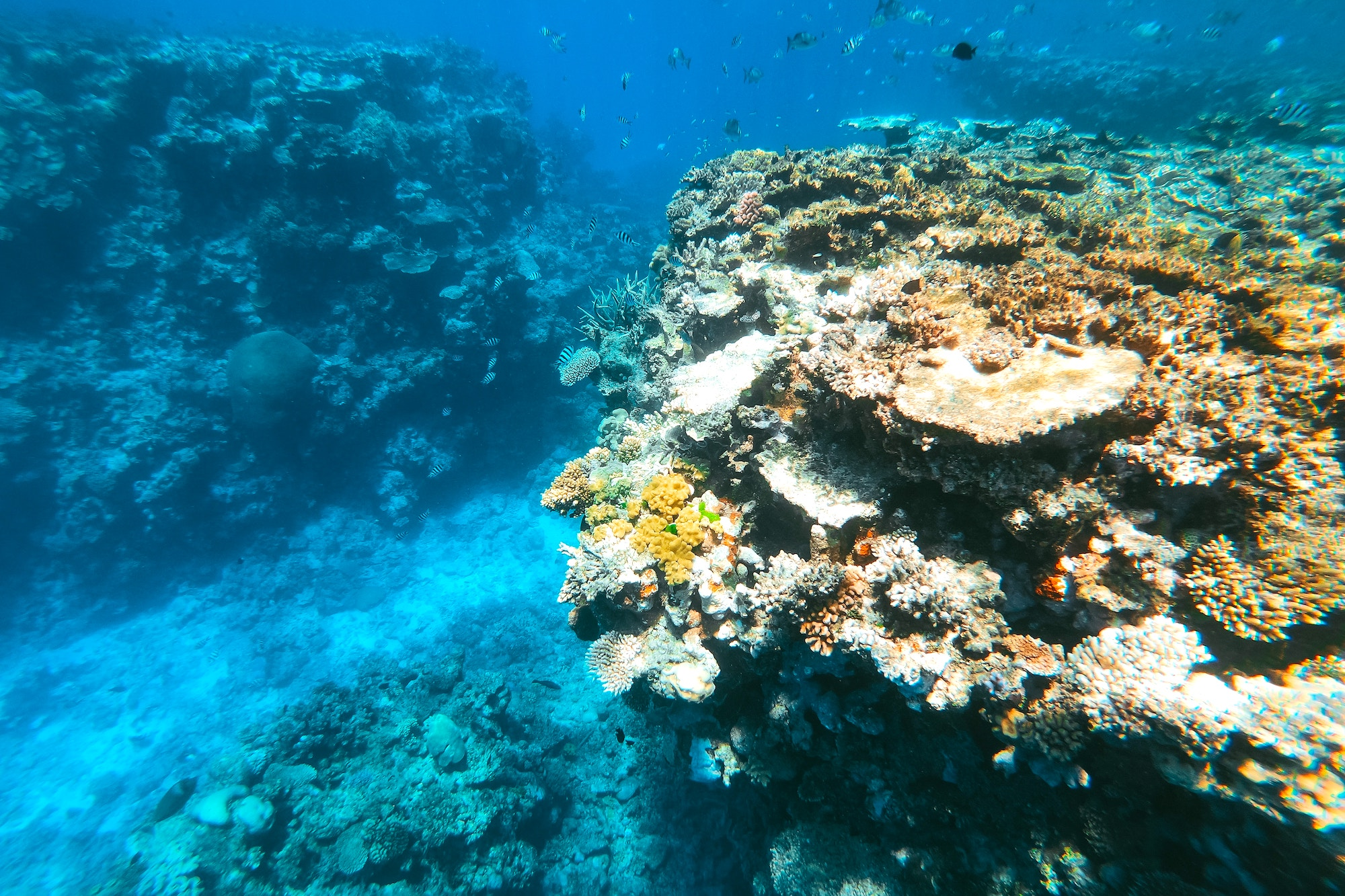 Coral in Great Barrier Reef Australia