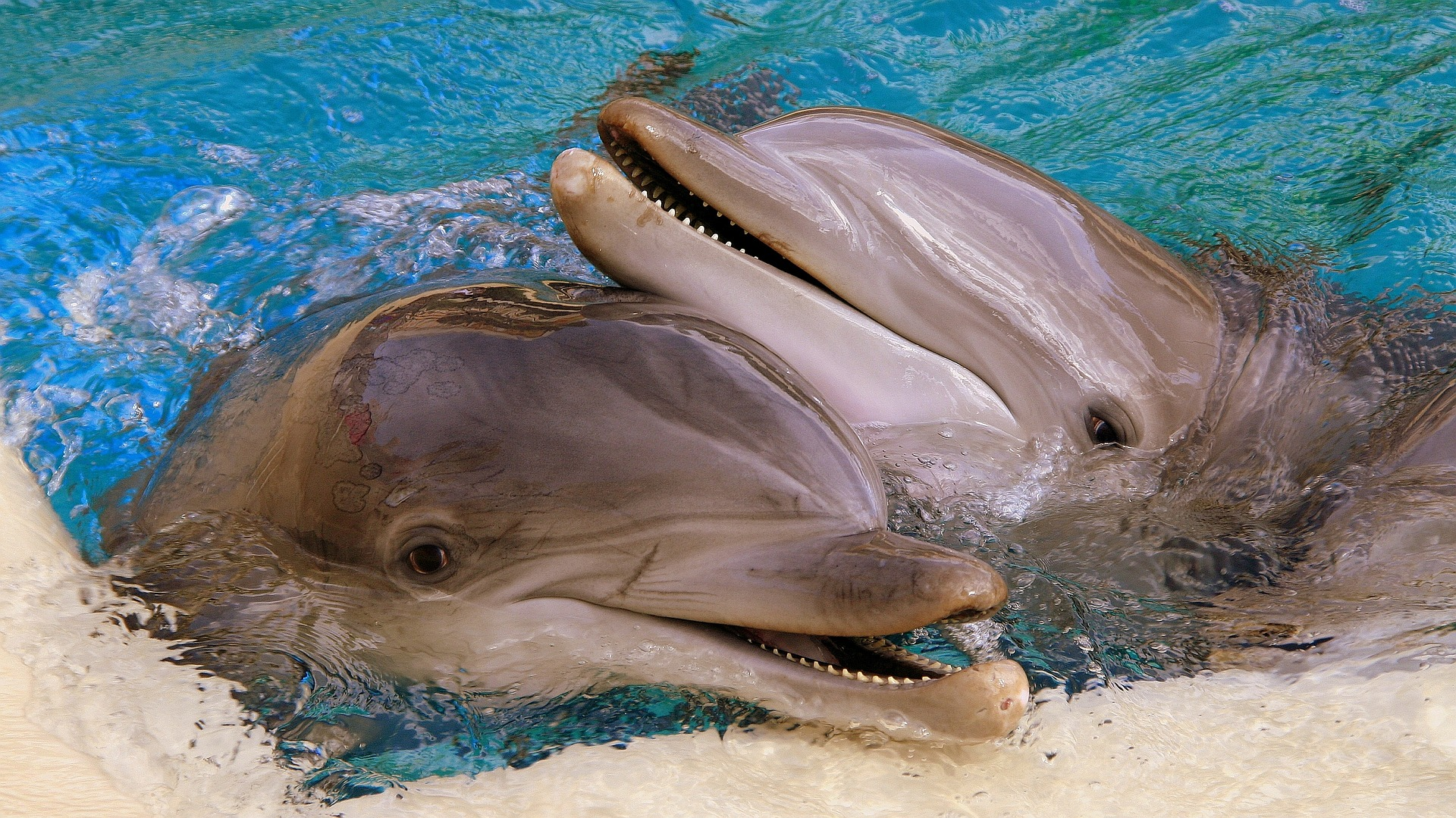 dolphins-2661836_1920