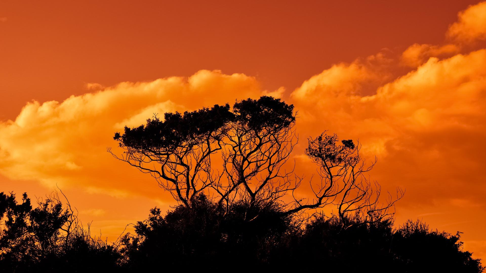 trees-2920264_1920