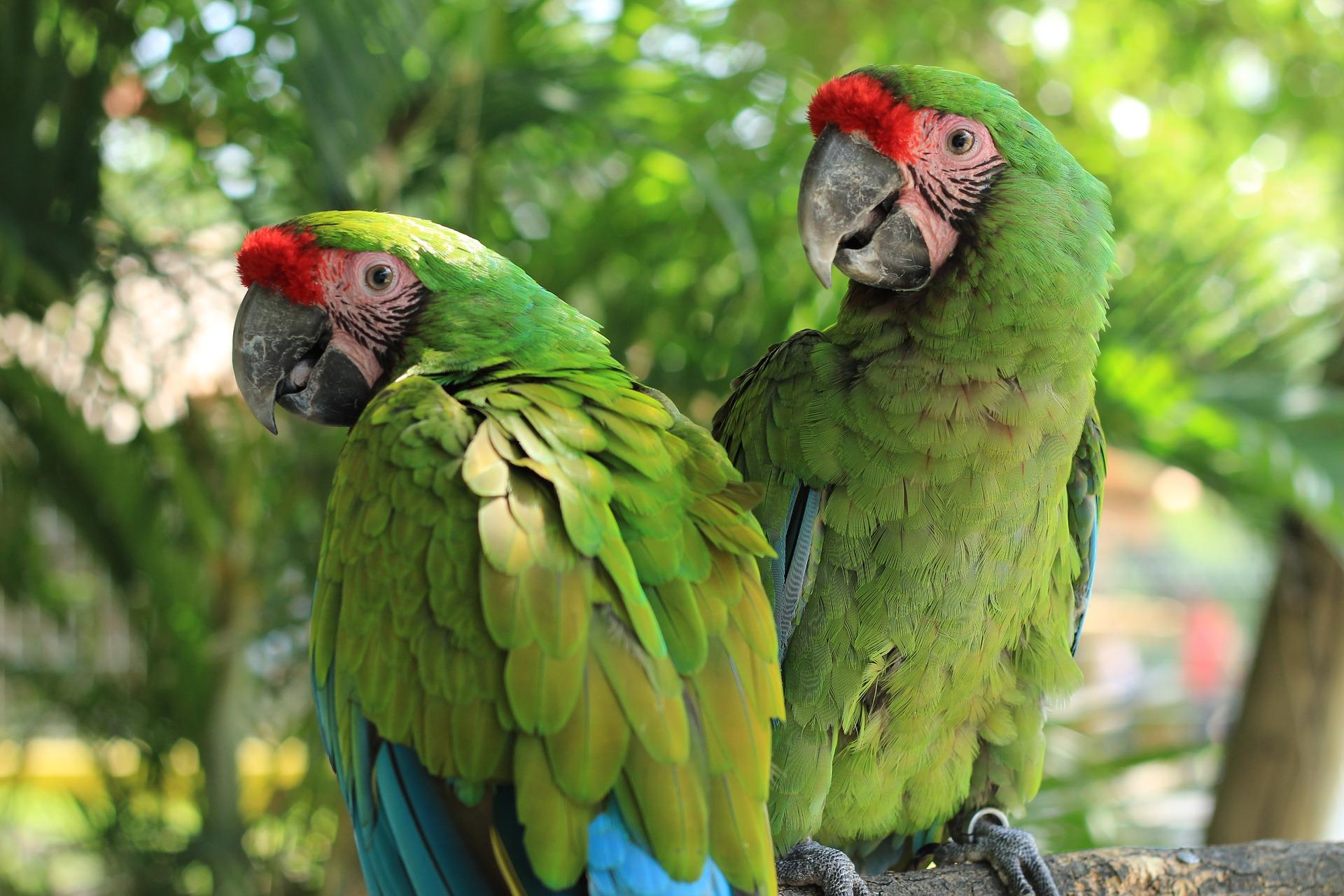 parrot-2659023_1920