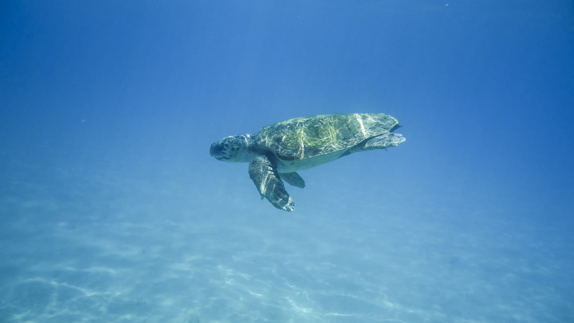 turtle-1608044_1920