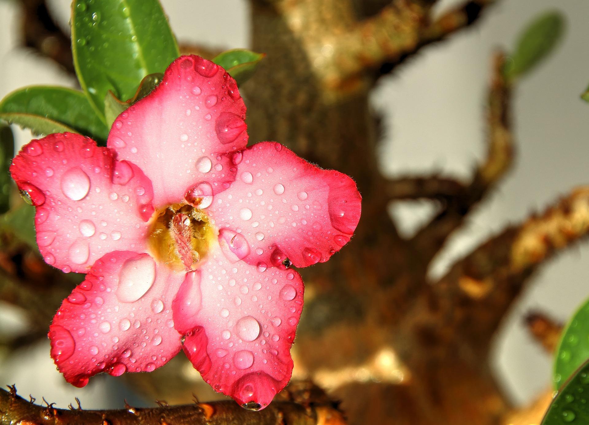 flower-1534806_1920