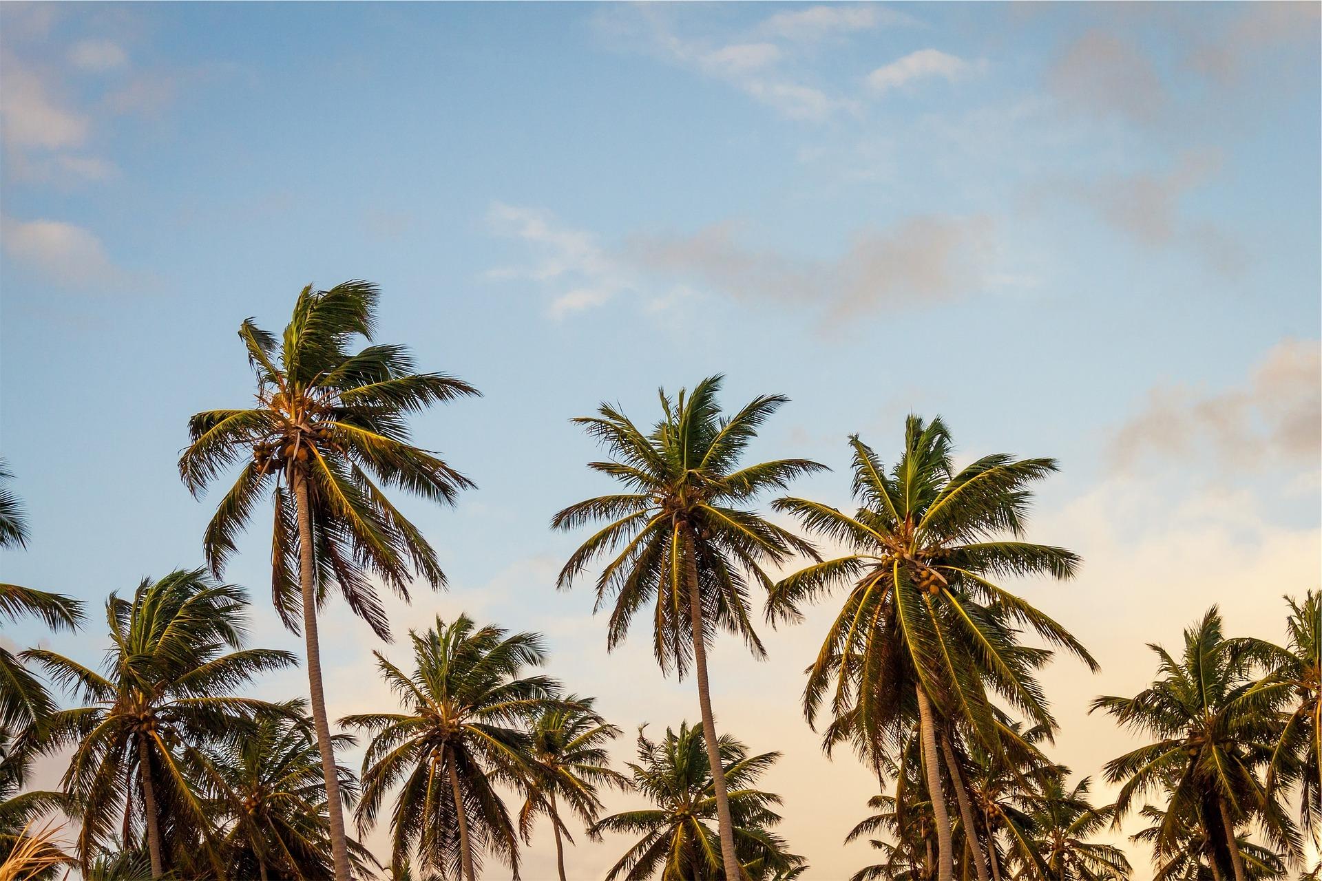 palm-677783_1920