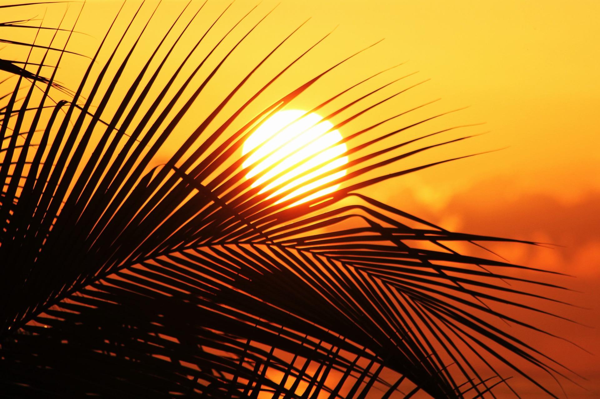 sun-of-jamaica-910070_1920