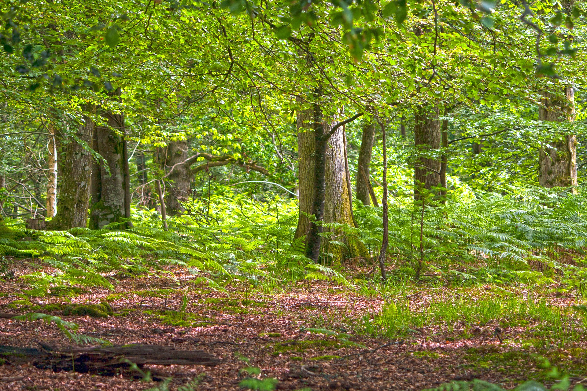 forest-907742_1920