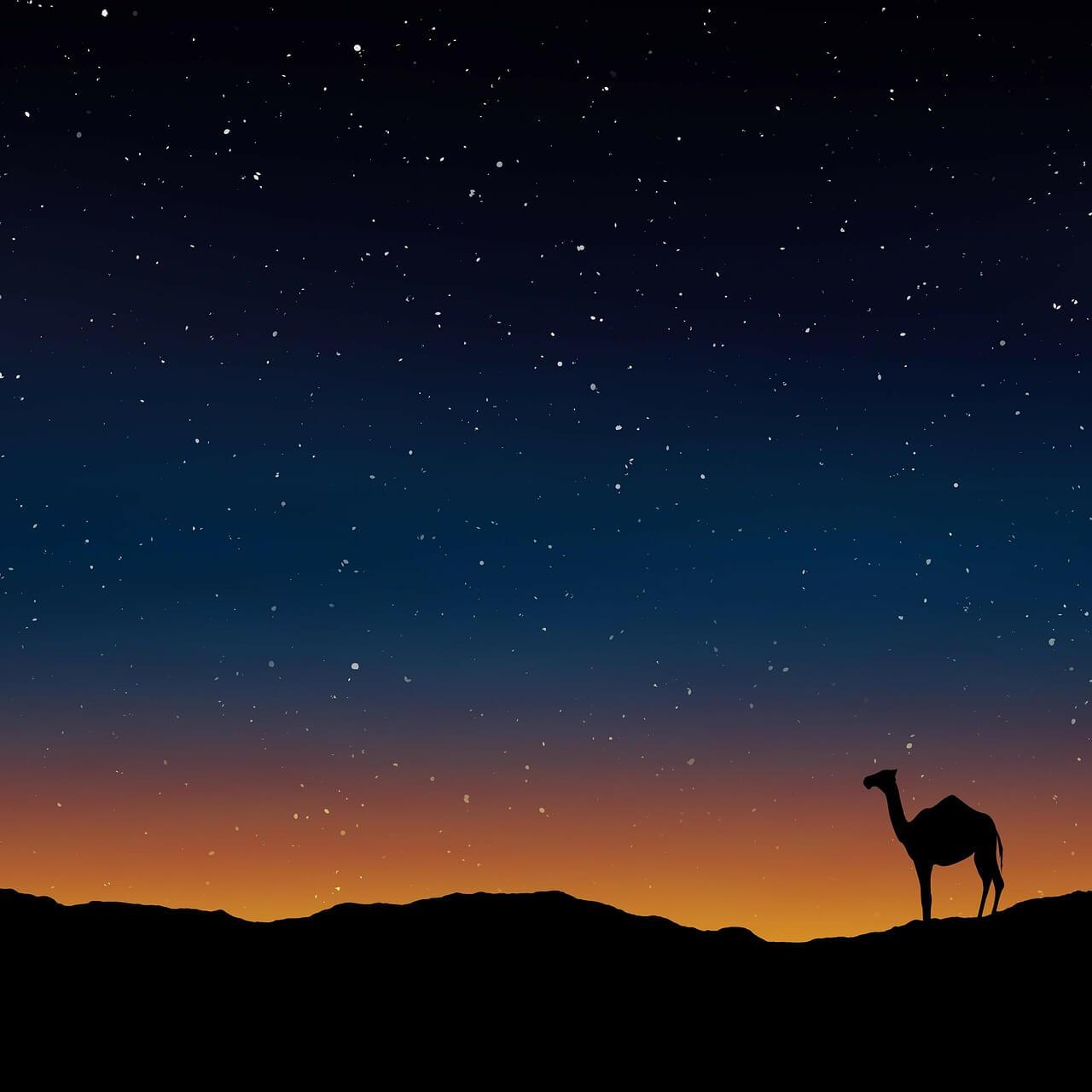 camel-163703_1280