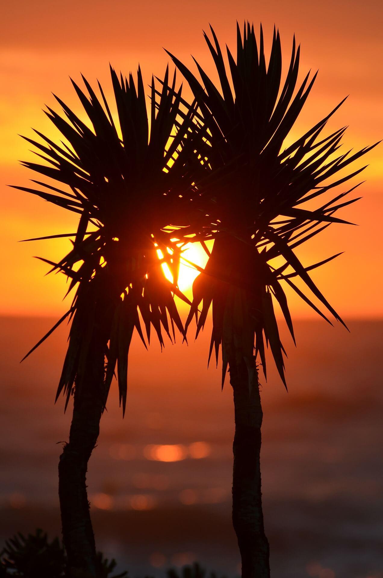palm-trees-323350_1920