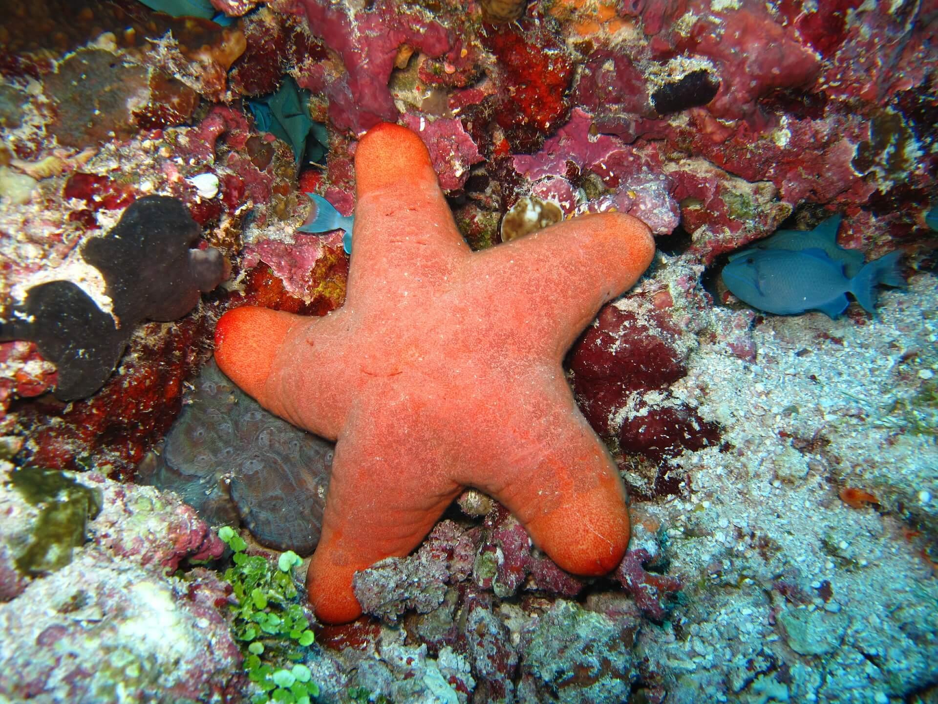 starfish-430361_1920